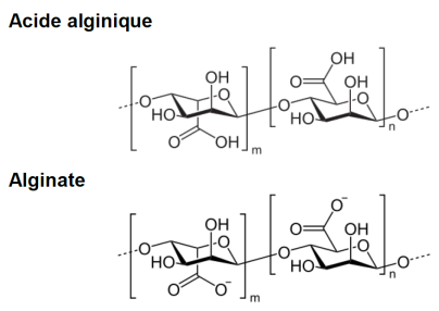 alginique-alginate