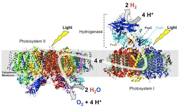 PS-Hydrogenase